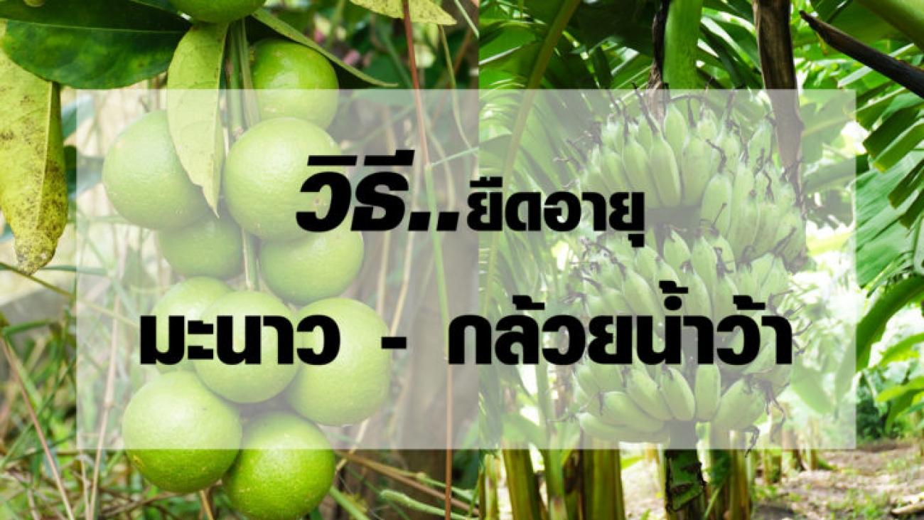 มะนาวกล้วย-728x410